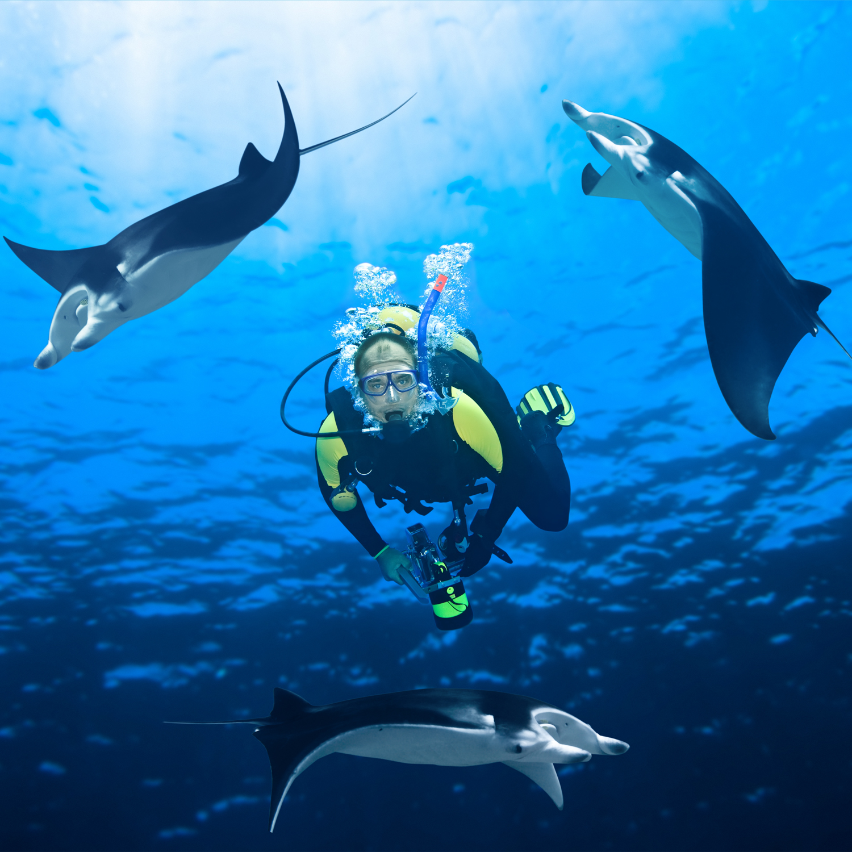 Cours de plongée egypte